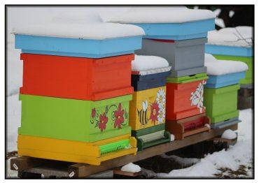 Winter im Bienendorf