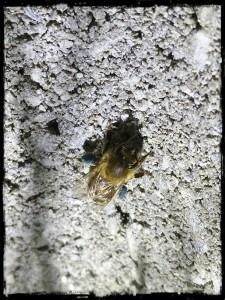 Pollenhöschen in blau