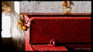 erster Pollen